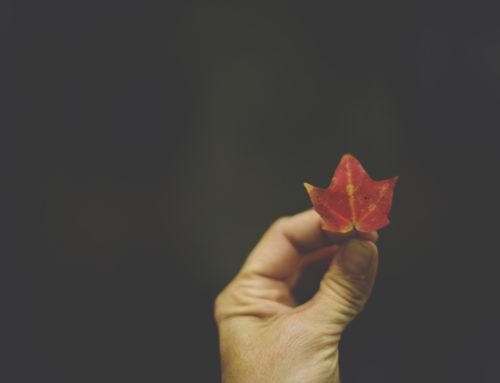 Free Fall…..